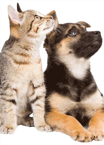 Bornego_kat-en-hond